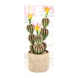 Flores y plantas en macetas